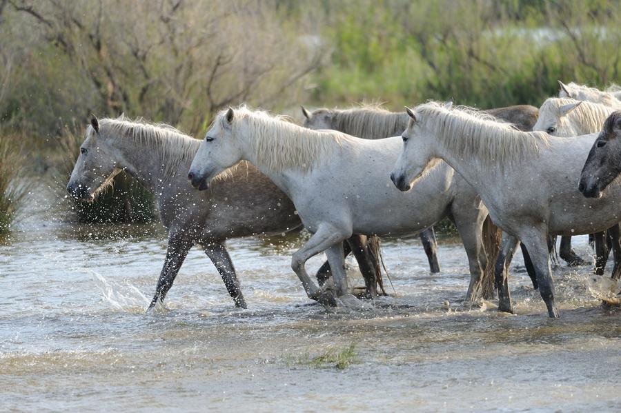 Дикие лошади - это не только мустанги... - фото 1000-d3ae67a029337d9319f7709c84ef999a, главная Книги о лошадях Конные истории Поведение лошади , конный журнал EquiLIfe