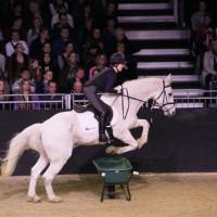 EQUITANA - фото IMG_0666-200x200, Новости , конный журнал EquiLIfe