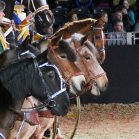 EQUITANA - фото IMG_1469-200x200, Новости , конный журнал EquiLIfe