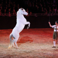 EQUITANA - фото IMG_1518-200x200, Новости , конный журнал EquiLIfe