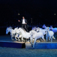 EQUITANA - фото IMG_1890-200x200, Новости , конный журнал EquiLIfe