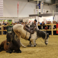EQUITANA - фото IMG_2423-200x200, Новости , конный журнал EquiLIfe