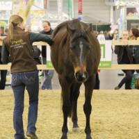 EQUITANA - фото IMG_2451-200x200, Новости , конный журнал EquiLIfe