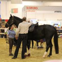 EQUITANA - фото IMG_2481-200x200, Новости , конный журнал EquiLIfe