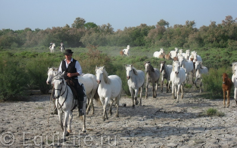 ФРАНЦИЯ, Прованс, Камарг - фото z_f26762c4_wm, , конный журнал EquiLIfe