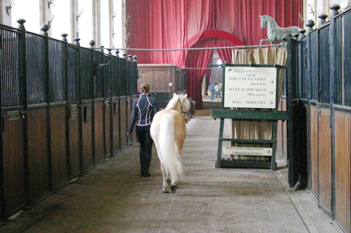 Grandes Écuries - Живой Музей Лошади - фото 134, главная Конные истории Конюшня События Фото , конный журнал EquiLIfe