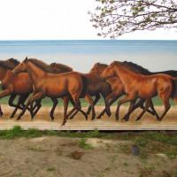 Уличный художник Cee Pil - фото 13653446_10154278344898389_900841516693703489_o-200x200, главная Фото , конный журнал EquiLIfe