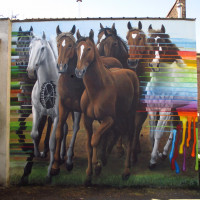 Уличный художник Cee Pil - фото 14068004_10154410200603389_2052175709044505581_o-200x200, главная Фото , конный журнал EquiLIfe