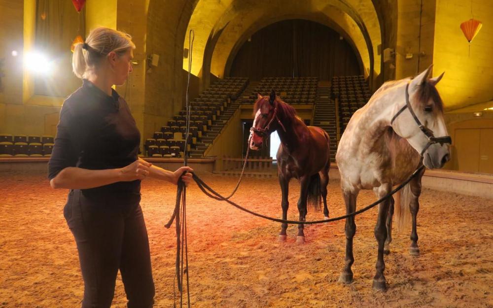 Интервью с Sophie Bienaimé, директором Больших конюшен замка Шантийи - фото 7182300_2bf76146-7c43-11e7-8ac4-c28afe35a79e-1_1000x625, главная Интервью , конный журнал EquiLIfe