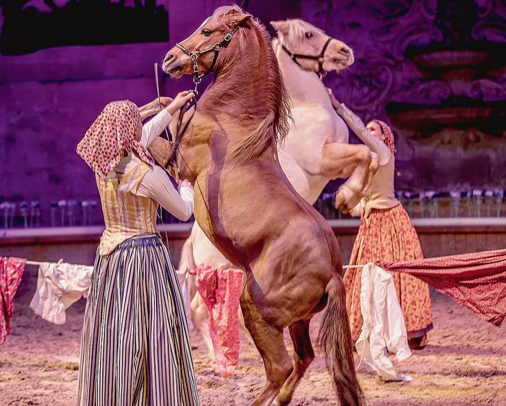Интервью с Sophie Bienaimé, директором Больших конюшен замка Шантийи - фото Domaine-Chantilly-propose-spectacles-chaque-Noelplus-trente_0_730_584, главная Интервью , конный журнал EquiLIfe