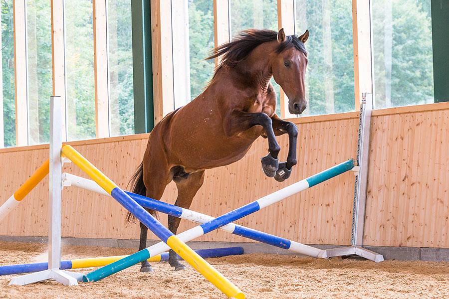 Спаривание лошадей. Зачатие и рождение жеребенка - фото shprinh-top, главная Здоровье лошади Лошадь , конный журнал EquiLIfe
