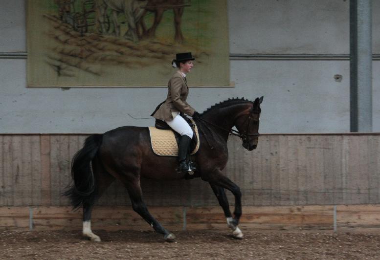 Можно ли содержать спортивных лошадей в активной конюшне? - фото 3, главная Содержание лошади , конный журнал EquiLIfe