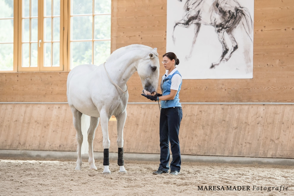 Программа семинара Ани Беран 22-27 июля 2019 - фото beran-workshop-2018-5-16, главная , конный журнал EquiLIfe