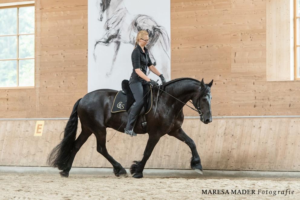 Программа семинара Ани Беран 22-27 июля 2019 - фото beran-workshop-2018-5-6, главная , конный журнал EquiLIfe