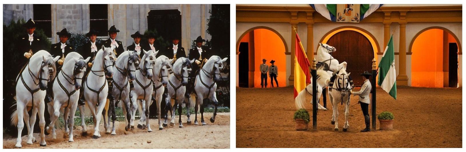 Август 2019 Испания, частный визит в Royal Andalusian School Of Equestrian Art - фото 02, , конный журнал EquiLIfe