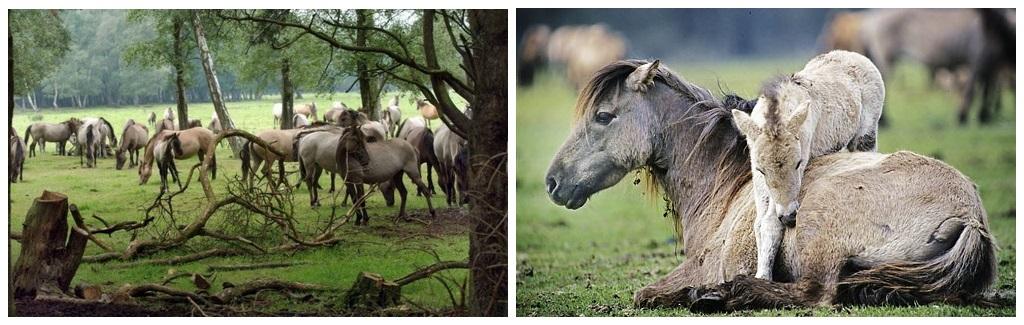 19-25 мая 2020 Мариус Шнайдер и Бент Брандеруп в семинаре «Справедливость для лошадей» - фото 23-61010877-23-61010878-1400515509, , конный журнал EquiLIfe