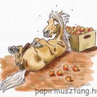 Карикатуры Papírmusztáng - фото 314530_181085002034463_1429446543_n-200x200, главная Фото , конный журнал EquiLIfe