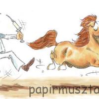 Карикатуры Papírmusztáng - фото 525838_176909005785396_917405528_n-200x200, главная Фото , конный журнал EquiLIfe