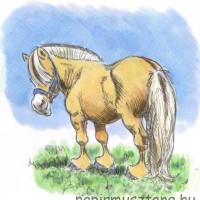 Карикатуры Papírmusztáng - фото 550129_197746550368308_753816157_n-200x200, главная Фото , конный журнал EquiLIfe