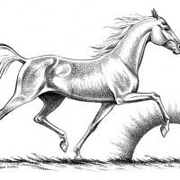 Волшебные лошади Оксаны Кукс - фото 6704e3d4-200x200, главная Фото , конный журнал EquiLIfe