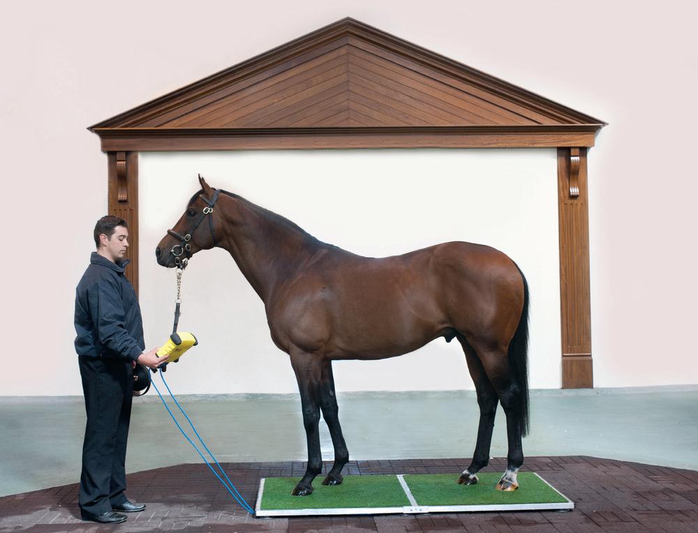 Зачем надо знать ТОЧНЫЙ вес лошади? - фото Horseweigh+main+pic, главная Здоровье лошади Содержание лошади , конный журнал EquiLIfe