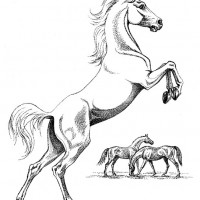 Волшебные лошади Оксаны Кукс - фото ICwIWoe4Ejw-200x200, главная Фото , конный журнал EquiLIfe