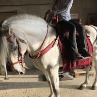 Мариус Шнайдер, классическая выездка, июнь 2019 - фото IMG_3093-200x200, , конный журнал EquiLIfe