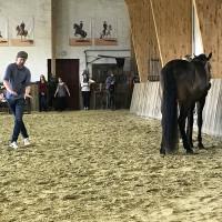 Мариус Шнайдер, классическая выездка, июнь 2019 - фото IMG_3149-200x200, , конный журнал EquiLIfe