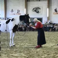 Мариус Шнайдер, классическая выездка, июнь 2019 - фото IMG_3161-200x200, , конный журнал EquiLIfe