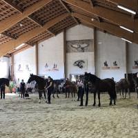 Мариус Шнайдер, классическая выездка, июнь 2019 - фото IMG_3192-200x200, , конный журнал EquiLIfe