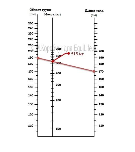 Как измерить вес лошади измерительной лентой - фото 3_wm, главная Здоровье лошади Рацион Содержание лошади , конный журнал EquiLIfe
