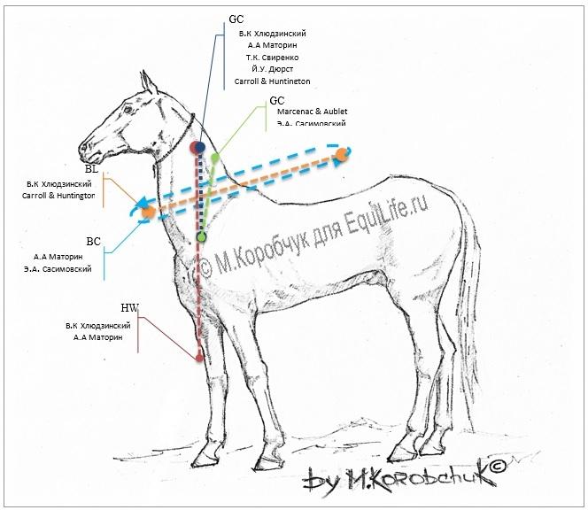 Как измерить вес лошади измерительной лентой - фото 4_wm, главная Здоровье лошади Рацион Содержание лошади , конный журнал EquiLIfe