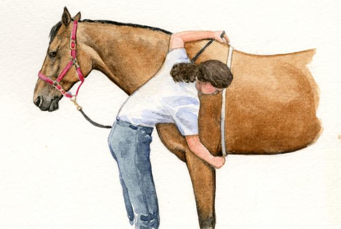 Как измерить вес лошади измерительной лентой - фото 6, главная Здоровье лошади Рацион Содержание лошади , конный журнал EquiLIfe