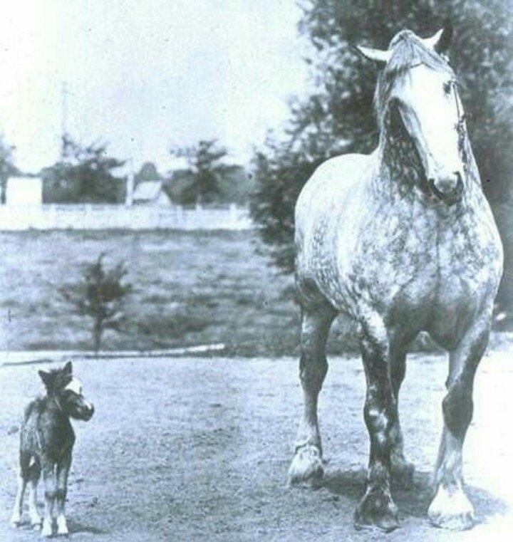 Как правильно сделать промеры лошади, чтобы определить вес - фото 65635546_2383653211710356_7277339861323874304_n, главная Разное , конный журнал EquiLIfe
