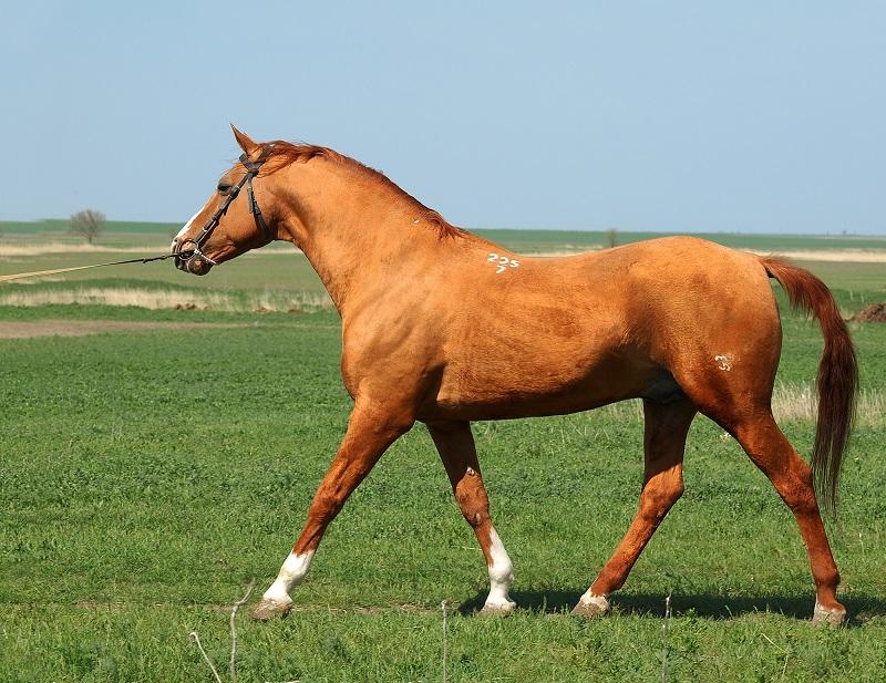 Как правильно сделать промеры лошади, чтобы определить вес - фото Datchanin_86, главная Разное , конный журнал EquiLIfe