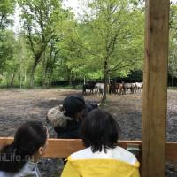 Поездка по Франции и в гости в Марио Люраши с EquiLife.ru май 2019 - фото IMG_1933_wm-200x200, , конный журнал EquiLIfe