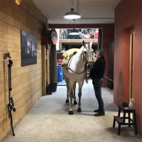 Поездка по Франции и в гости в Марио Люраши с EquiLife.ru май 2019 - фото IMG_1959_wm-200x200, , конный журнал EquiLIfe