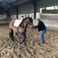 Поездка по Франции и в гости в Марио Люраши с EquiLife.ru май 2019 - фото IMG_2094_wm-200x200, , конный журнал EquiLIfe