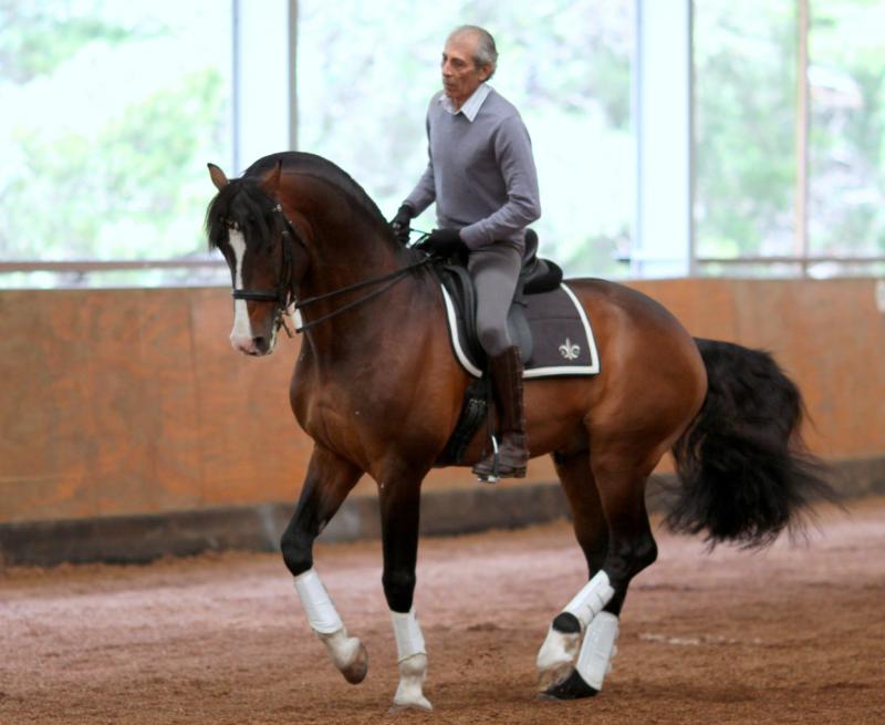 3-7 октября 2019 (Польша) Маноло Мендес - Испанской школы верховой езды (Херес) - фото Manolo-Mendez-Pirouette-e1514491174665, , конный журнал EquiLIfe