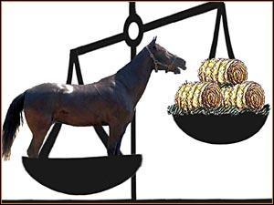 Как правильно сделать промеры лошади, чтобы определить вес - фото TennesseWalkingHorseBalanceDiet, главная Разное , конный журнал EquiLIfe