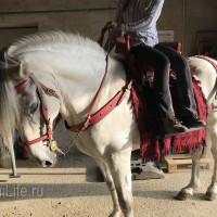 Мариус Шнайдер май 2019 - фото IMG_3093_wm-200x200, , конный журнал EquiLIfe