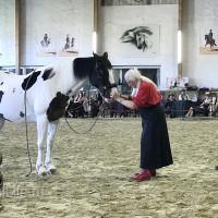 Мариус Шнайдер май 2019 - фото IMG_3161_wm-200x200, , конный журнал EquiLIfe