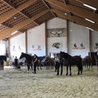 Мариус Шнайдер май 2019 - фото IMG_3192_wm-200x200, , конный журнал EquiLIfe