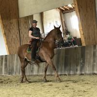 Мариус Шнайдер май 2019 - фото IMG_3202_wm-200x200, , конный журнал EquiLIfe