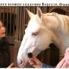 Интервью Конная Академия в Версале