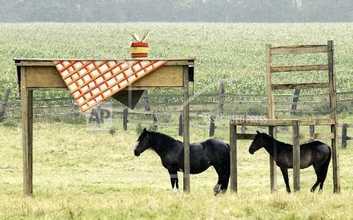 Креативный шелтер для лошадей - фото AP0207240730, главная Содержание лошади , конный журнал EquiLIfe