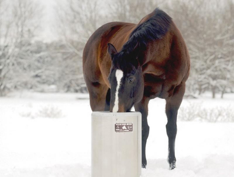 Содержание лошадей зимой - фото courtesy-nelson, главная Здоровье лошади Содержание лошади , конный журнал EquiLIfe