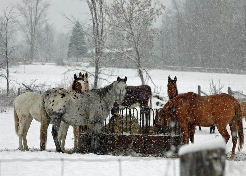 Содержание лошадей зимой - фото equine-horse-supplements-kentucky-performance-products-626-Large, главная Здоровье лошади Содержание лошади , конный журнал EquiLIfe
