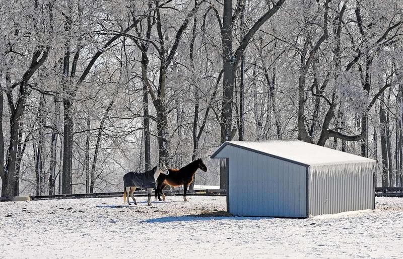 Содержание лошадей зимой - фото horses-winter-run-in-shed, главная Здоровье лошади Содержание лошади , конный журнал EquiLIfe