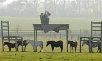 Фото: iandanielstewart.com